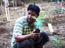 Tanam Gaharu di Kebun (21)