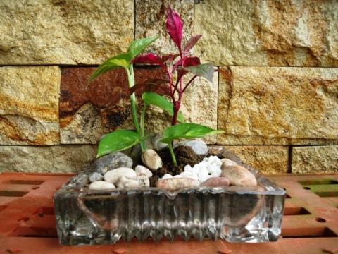 Bunga Kher (2)